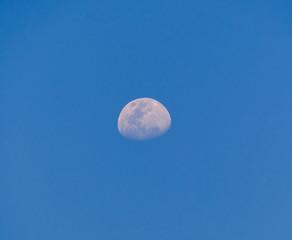 Rabbit in moon