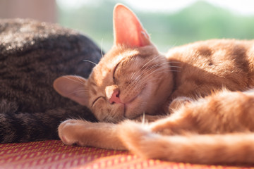 Ginger cat sleeping on the mat, cute pet at home