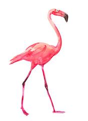 Watercolor sketch of a beautiful flamingo bird
