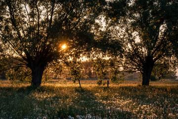 Wiosenne pylenie drzew i roślin