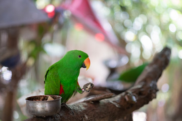 Beautiful Green parrot Great-Green Macaw sitting on the old tree branch in Thailand.