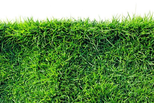 Zoysia matrella,Manila Grass or Temple Grass, a grassy shade of sun.(isolated on white and clipping path)