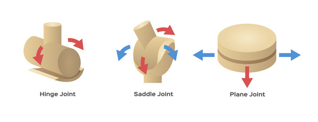 joint type vector