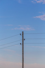 Single electricity pole with wires on the blue sky background. Industry of power.