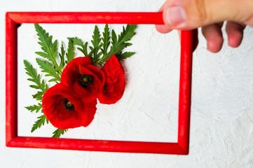 Hand holding photo frame above poppy flowers