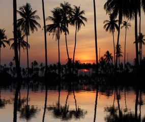beautiful orange sky with cloud behind the coconut trees at sunset in Thailand
