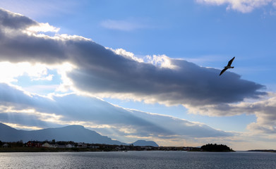 Clouds and bird