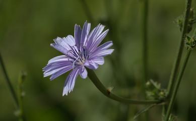Purple flower, Corfu, Greece