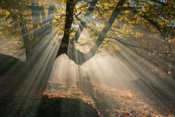 sunbeams filtering through smoke and a chestnut tree in autumn
