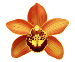 Tropical Orchid Cymbidium flower.