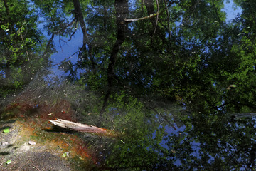 Pond reflection in fontainebleau forest