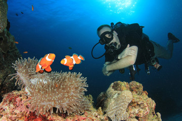 Scuba diver and Clownfish (Anemonefish) fish