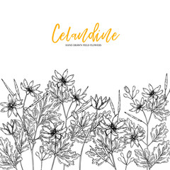 Hand drawn wild hay flowers. Celandine flower. Medical herb. Vintage engraved art. Border composition. Good for cosmetics, medicine, treating, aromatherapy, nursing, package design health care.