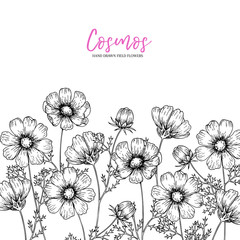 Hand drawn wild hay flowers. Cosmos flower. Medical herb. Vintage engraved art. Border composition. Good for cosmetics, medicine, treating, aromatherapy, nursing, package design health care.