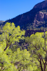 Early morning light in spring brightens trees in Coller State Wildlife Area, located along the Rio Grande and the road to Creede in the San Juan Mountains of southern Colorado