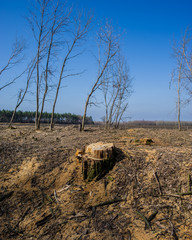 Illegal Felling of Forest Arrays.