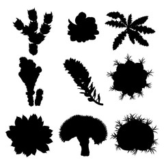 Black silhouettes cactus fashion set design. Cacti mood collection. Sketchy hand drawn style illustration. Succulent terrarium collection. Wild floral exotic tropical forest. Vector.