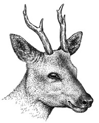 black and white engrave isolated deer illustration