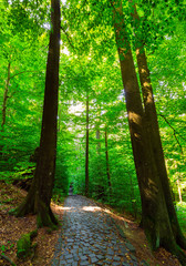 cobble stone path through forest. lovely nature scenery with tall trees and green foliage