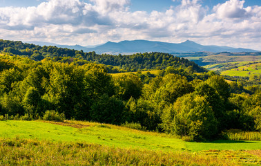 forest on a grassy hill in afternoon. Pikui mountain in the distance under the cloudy afternoon sky. Lovely Carpathian countryside