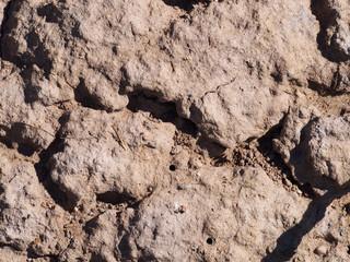 Dry Cracking Ground Texture