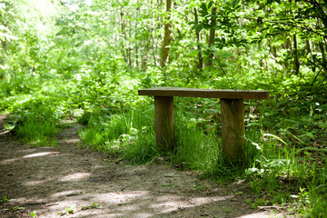Basic wooden bench by a pathway in the woods