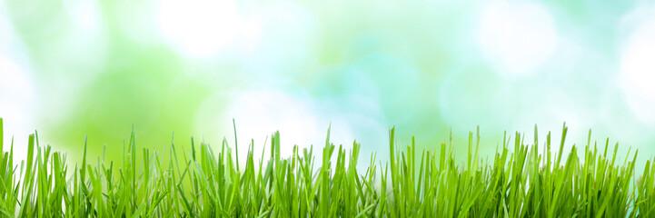 Springtime Background Banner