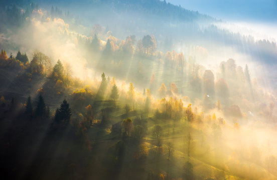 fog over the forest in morning light. beautiful nature background. trees with yellow foliage on rolling hills in autumn. amazing atmosphere in Carpathian mountains