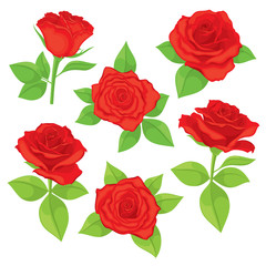 Vector set of realistic, detailed, isolated Rose buds in red color with green leaves on white background. Illustration for design on white background.
