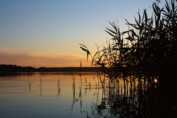 sunset on a pond with sedge