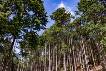 林業イメージ