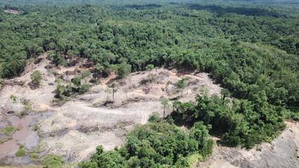 Deforestation. Borneo rainforest destroyed to make way for oil palm plantations