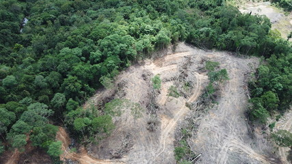 Deforestation. Borneo rainforest destroyed to make way for oil palm plantations