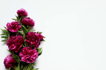 peonies on a white background