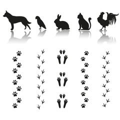 silhouettes of animals with footprints on white background