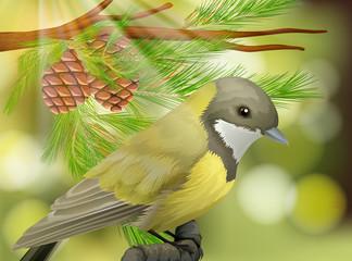 A Beautiful Bird on Pine Tree