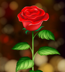 A Beautiful Red Rose Background