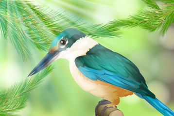Colourful Bird in Nature Background