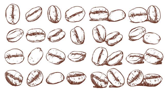 Coffee beans, sketch, vector drawing set, Ingredient, Doodle design