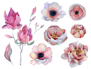 Watercolor pink and purple peonies and anemone flowers set