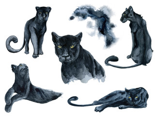 Watercolor set with black panthers animals collection