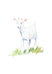 Goat on the grass.Farm animals.Watercolor hand drawn illustration.White background.