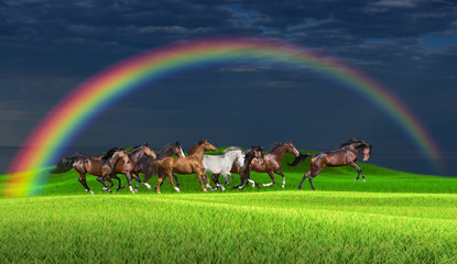 Herd of horses running along a green meadow under a rainbow against a stormy sky Wall mural