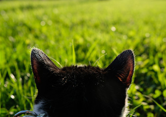 Cat ears on grass backround