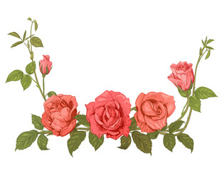 Branches pink roses, bouquet with pink, red flowers, buds, green stems, leaves on white background, hand draw sketch in engraving vintage style, horizontal frame for design, vector