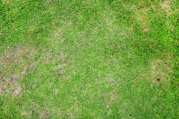 Natural background of green grass, Beautiful green grass texture
