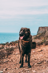 Cão da zona - Arrifana