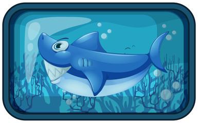 A Kappy Shark in the Aquarium