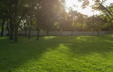 Image of green garden background in the park