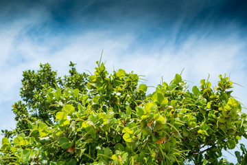 blue sky with clouds, green in focus bush with out of focus tree, nice colors